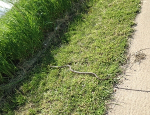 snake_footpath_close-up