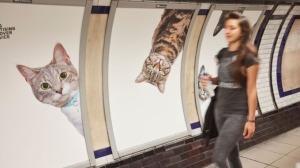 cat_tube-_glimpse