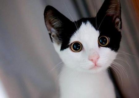 cutest_cat